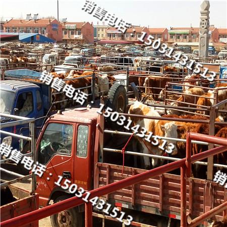 河北肉牛销售市场