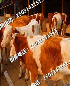 牛饲料种类